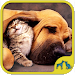 Download Cats And Dogs Games 5.13.032 APK